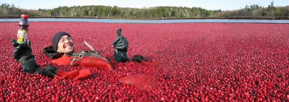 The art of the cranberry